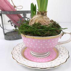 Frühling in der Tasse! Hyazinthe