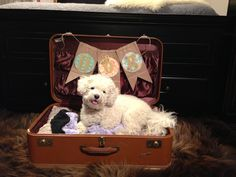 Repurposed suitcase as a dog bed.