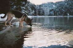 Dogs are the best!    Langeweile - nicht hier bei uns! Picdumps und Gifdumps direkt und ohne Wartezeit! Viel Spass dabei!