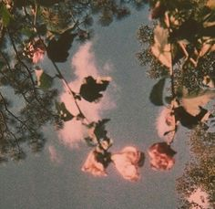Uploaded by Artemis Granger. Find images and videos about pretty, vintage and aesthetic on We Heart It - the app to get lost in what you love. Flower Aesthetic, Aesthetic Vintage, Pink Aesthetic, Nature Aesthetic, Aesthetic Grunge, 1950s Aesthetic, Summer Aesthetic, Aesthetic Fashion, Vintage Vibes