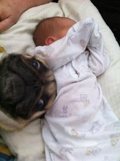 "The funny possible captions:  Hey!! So this is your kid???    Pug-bomb!    ""Hey, hey, hey! He's asleep! Can we go to the park?""    Baby: I don't want my picture taken!  Pug: PICTURE!?"