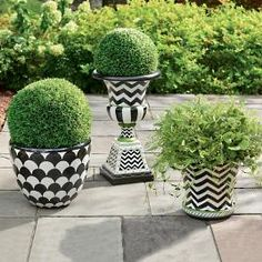 Black and White Painted Planters - Perfect for a patio. I love the bold black and white patterns on these planters. I think they'd look great on any patio. Buy this set, or make your own. Black Planters, Urn Planters, Outdoor Planters, Hanging Planters, Boxwood Garden, Topiary Trees, Deck Decorating, Grandin Road, Outdoor Settings