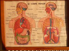 Ancienne Affiche scolaire ANATOMIE CORPS HUMAIN loft art deco medecine 1960
