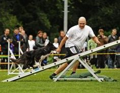 I am crazy about these agility folks!   They have the most amazing handling system, OneMInd, that everyone in the world, yes, literally everyone is incorporating into their own.  This is the future of dog agility.  It is clear, precise handling, with smooth flowing lines, that result in jaw-dropping agility runs.  Now matter what your current handling style is, you can learn something here.  Gotta' get the training DVDs.  Check out their videos on YouTube. Agility Training For Dogs, Dog Training Methods, Dog Agility, Dog Facts, Service Dogs, A Team, Faces, Smooth, Future