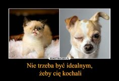 Mem z okazji Dnia Psa True Stories, Elf, Kawaii, Memes, Funny, Dogs, Cute, Animals, Historia