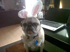 Easter Mop #mrpillows #sunshinepugs