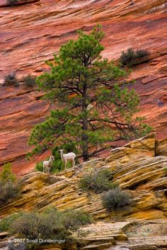love to see wildlife when visiting any park Escalante National Monument, Zion National Park, National Parks, Places To Travel, Places To See, Zion Park, Redwood Forest, Tree Forest, Forests