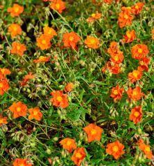 The Pefect Color. Bronze, Garden, Nature, Flowers, Plants, Color, Naturaleza, Garten, Lawn And Garden