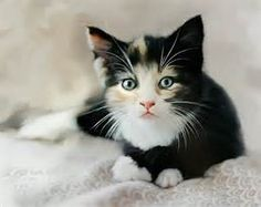 Black and White Cat Prints - Bing Images