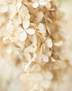 Fragrance. beige flowers
