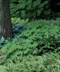 Four steps to successful planting under a tree, and which trees do/don't tolerate the disturbance to their roots