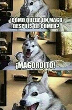 videos graciosos memes risas gifs graciosos chistes divertidas humor http://chistegraficos.tumblr.com/post/157844528976