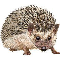 Hedgehog clipart graphics (Free clip art