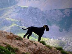 in vacanza con il vostro inseparabile amico a 4 zampe: http://blog.viaggiverdi.it/2013/08/in-vacanza-con-il-cane-5-spiagge-a-prova-di-fido/  Fotografia di Serge Vuillermoz, via Flickr