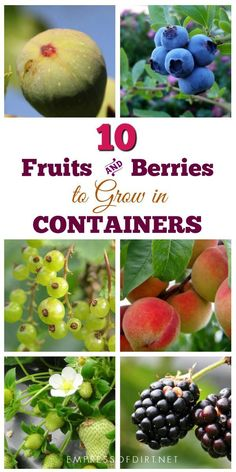 There are many fruits and berries that grow nicely in containers. If your garden space is limited or you have poor soil quality, container growing is an excellent option. # container Gardening 12 Best Fruits and Berries for Patio Containers Container Gardening Vegetables, Container Plants, Fruits And Vegetables, Vegetable Gardening, Growing Vegetables In Containers, Growing Veggies, Fruit Tree Garden, Garden Trees, Patio Trees