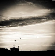 I manage to caught these seagulls, flying around with the first day light. It was around 6 am when I captured this scene. Seagulls Flying, All Over The World, Monochrome, My Photos, Scene, Clouds, Search, Link, Artist