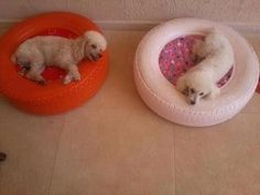 an old tire repurposed into a dog bed. Have fun trying to chew THAT Roxy!! Lol