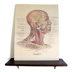 1920s Medical Chart II, $120, now featured on Fab.