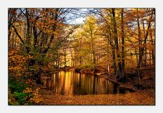 Seven lakes in autumn (Yedi goller/Bolu/Turkei)...