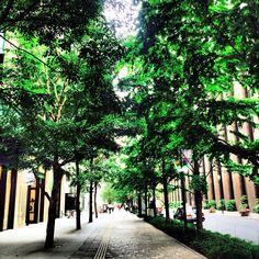 2014-06-02  新緑  いつもの交差点の木々がモリモリになっていた! 福岡は梅雨入りしたそう。 緑が深まってゆく。