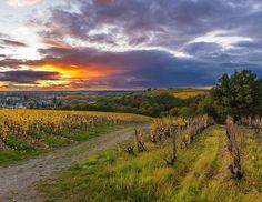 Le soleil se couche tranquille sur les paysages ondulés des vignes du Layon...