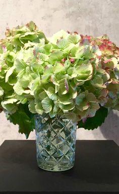 Wie mache ich Blumen und Blüten lange haltbar?   Es wäre doch ganz wunderbar, wenn wir den   Sommer ein wenig konservieren können. Am besten macht sich das mit   Blüten. Blumen und Blüten kann man einfach mit Glycerin konservieren.   Mehr zum Thema Blumen haltbar machen erfahrt Ihr auf unserem Blog.