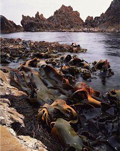 Tarkine Coast by Peter Dombrovskis