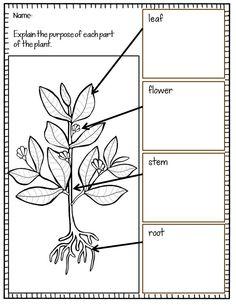 TIssue Worksheet, W1 CC Cycle 3 weeks 16 Pinterest