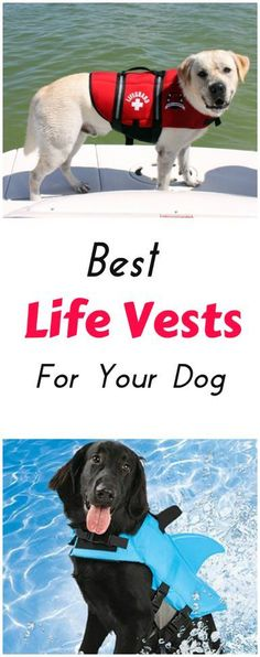 Need a great life vest for your dog? Here are some helpful tips on what to look for and our recommendations on the best life jackets you can buy today.