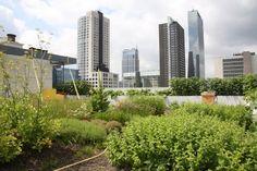 Dakakkers zoals hier op het Schieblock in Rotterdam zullen de stad in de toekomst maar deels kunnen voeden. Ze zijn er vooral voor de leuk. Interessanter is verticale landbouw: in leegstaande gebouwen, grootschalig, onder led-licht.