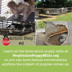 Learn the facts about the puppy mill industry. Become that person everyone asks about dogs. Your knowledge can help people make better decisions.  http://www.stoponlinepuppymills.org/how-can-you-help-end-puppy-mills-10-simple-ways-thats-how/
