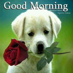 Good Morning Images Wallpaper Pictures Pics For Puppy Lover Good Morning Photos, Good Morning Friends, Good Morning Puppy, Cute Puppies, Cute Dogs, Dogs And Puppies, Labrador Retrievers, Cute Baby Animals, Animals And Pets