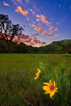 Beautiful #california