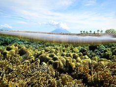 """north maluku's underwater #kakabantriptonorthmaluku #splitlevel #corals #morotai #ternate #halmahera #kakabantrip #malukuutara #barondamaluku #indonesia"""