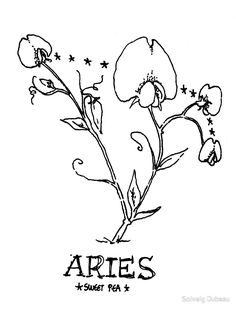 Floral Constellations - Aries by Solveig Dubeau