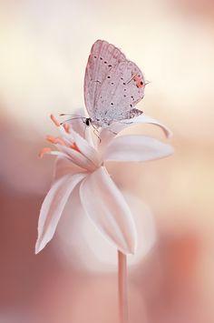 Motyl na kwiat (the butterly on a flower) • photo: Dorota Krauze on 500px