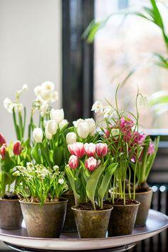 Voorjaarsbrengers: Woonplanten van maart #voorjaar #spring #lente #flowers #bloemen