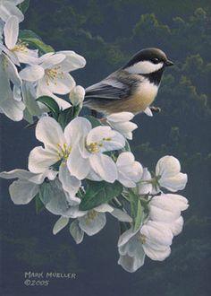Mark Mueller Wildlife Art bird painting - chickadee