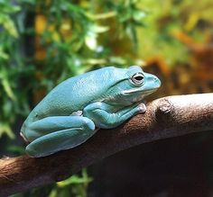 turquoise happens to be one of my fav colors cute frog