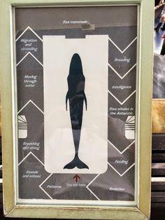 Woman or whale? | cabinet of curiosities | cabinet de curiosites | wunderkammer | Luca Cableri