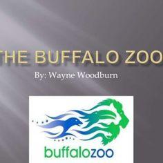 Last of the Wild Buffalo
