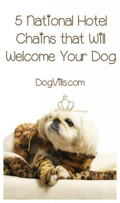 If you're planning a vacation with your dog, you'll need a pet-friendly place to stay, right? Check out the top 5 hotel chains that will welcome your dog! Doodle Your Dog Picks Animals And Pets, Cute Animals, Road Trip With Dog, Dog Friendly Hotels, Dog Safety, Pet Travel, Travel Tips, Solo Travel, Travel Destinations