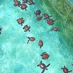 Wow 0:) cc -> @aquarium @aquarium @aquarium @aquarium @aquarium  #ucp #vines #frndz #lcwu #uol #pakistani #friendship #nice #beautiful #family #summer #instalike #selfie #igers #follow #instadaily #instamood #friends #girl #repost #followme #instagood #tagsforlikes #amazing #bestoftheday #photooftheday #fun #smile #like4like #happy by travelingtheworldd