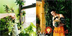 Najsilnejšia zmes prinúti rozkvitnúť vaše izbovky, ako na povel: Budú obsypané dlho po tom, ako všetkým ostatným odkvitnú! Summer Dresses, Plants, Minden, Gardening, Cactus, Summer Sundresses, Lawn And Garden, Plant, Summer Clothing