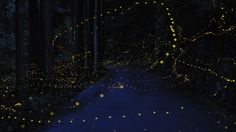 Yuri Karo - fireflies photographs