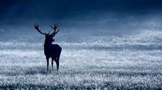 deer dark wallpaper hd
