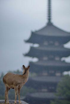 Nara, Japan | Takae Tujimoto