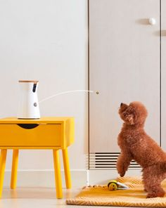 Furbo Dog Camera - Gift idea for dog owner - Toss a treat to your dog through the free Furbo iOS/Android app. The easily way to get connected to your dog and feed it. - $249.00
