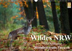 Wildes NRW - Beeindruckende Tierwelt - CALVENDO Kalender von Stefan Rosengarten -  #calvendo #calvendogold #kalender #fotografie #nrw #tiere #tierfotografie