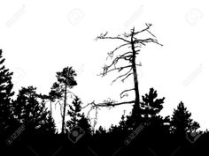 Image result for vector pine forest